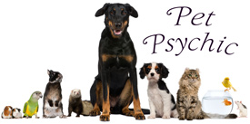 Pet Psychic, dog, cat, bird, fish, guinea pig, mouse, ferret, rabbit
